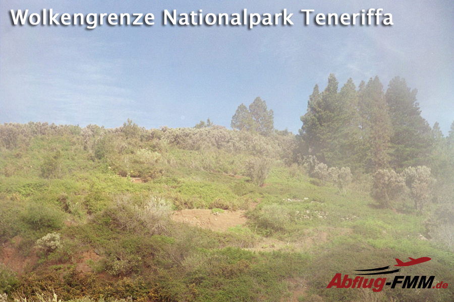 Wolkennebel Nationalpark Teneriffa